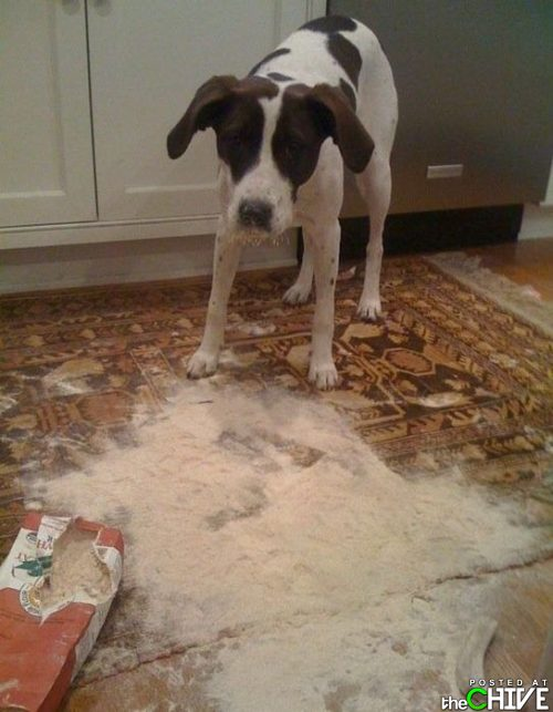 Babies And Dogs Making Messes
