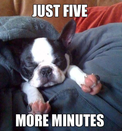 Good Morning Meme Dog : Cute dogs with captions for monday michael bradley
