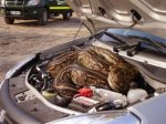 Here is the problem with starting your car...