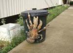 giant coconut crab