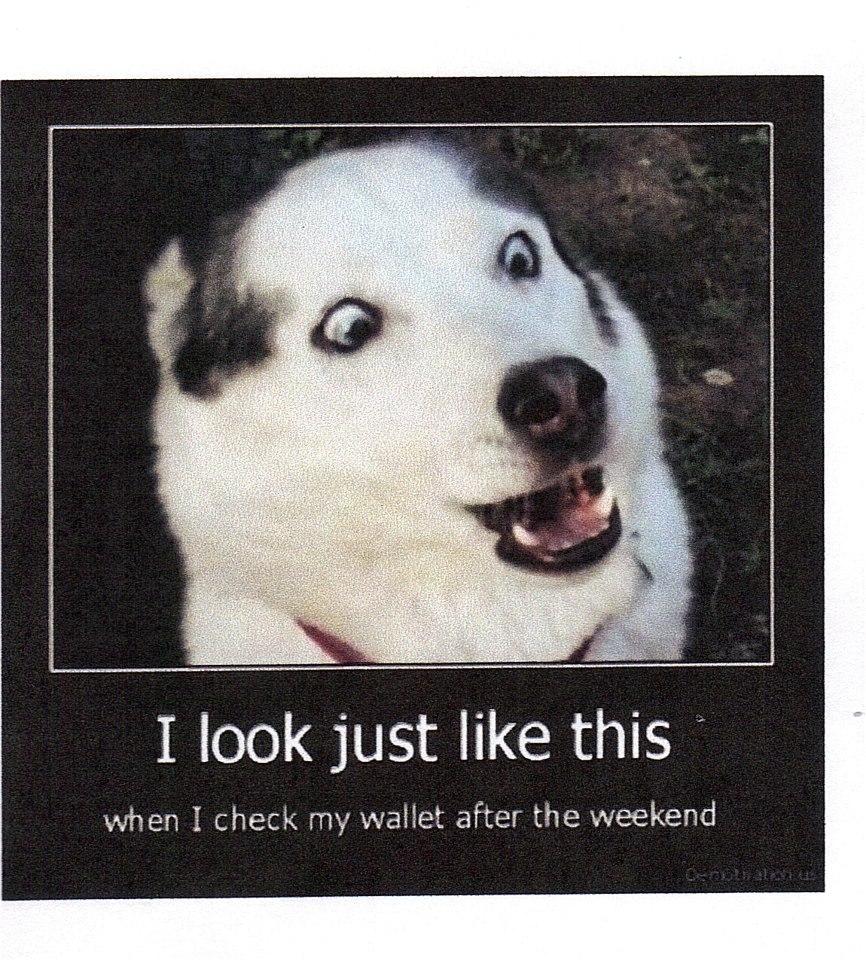 Monday Cute Dogs | Michael Bradley - Time Traveler