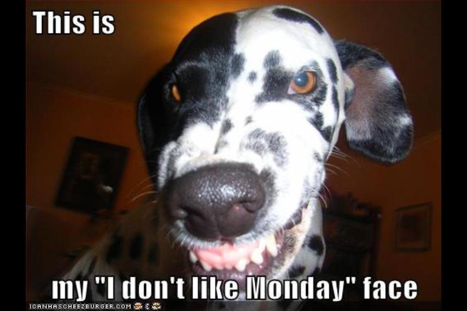 Monday Word Monday Cute Dogs | Mic...