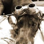 The blood hound goes not only by scent, but magnifying glasses.