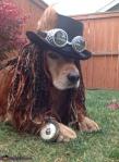 air pirate hound