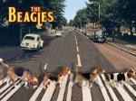 The Beagles.