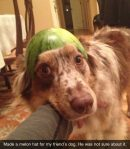 Please don't put watermelon hats on your dog...