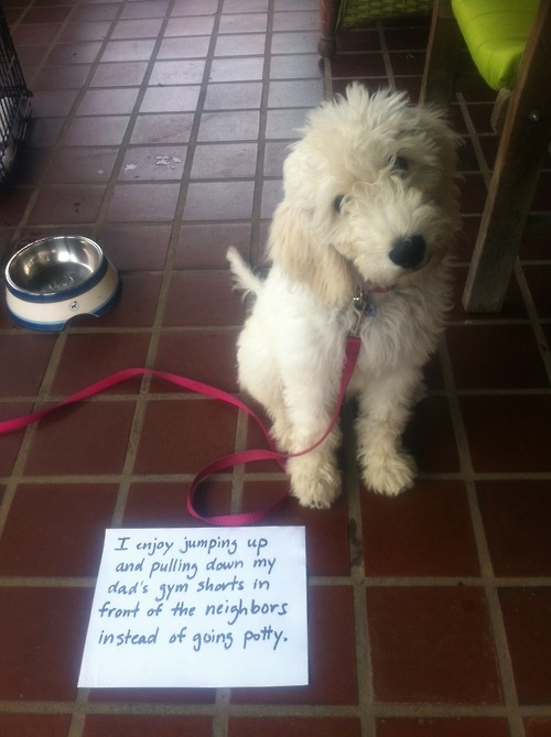 100 best dog shaming moments   large msg 134885883226 Michael zzzVF4P8