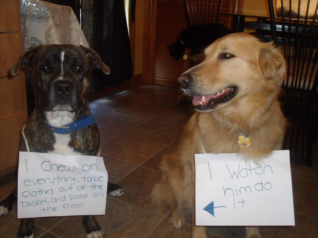 Monday Dog Pics Dog Shaming Michael Bradley Time