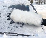 Wampa hand snow scraper