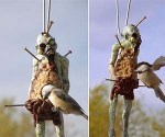 Sick bird feeder