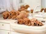 89663-wallpapers-cute-dogs