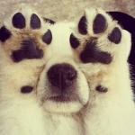 Cute-Dog-dogs-33531468-500-500