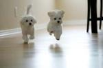 cute-dog-jumping1