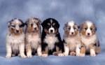 Cute-Dogs-003