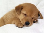 cute-puppy-dogs-33237869-1024-768
