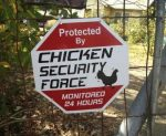 We monitor crime, then run away clucking