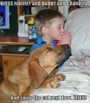 Prayerful dog