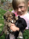 Nothing like a kid with an armful of puppies.