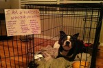 dog-shaming-hoarder