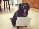 dog-shaming-kamingusu-flickr2