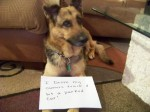pet-dog-shaming-hit-car-drove-truck