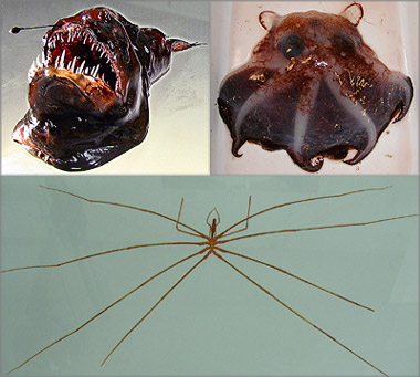 Real life giants spider - photo#6