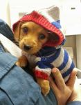 animals-wearing-hoodies-18