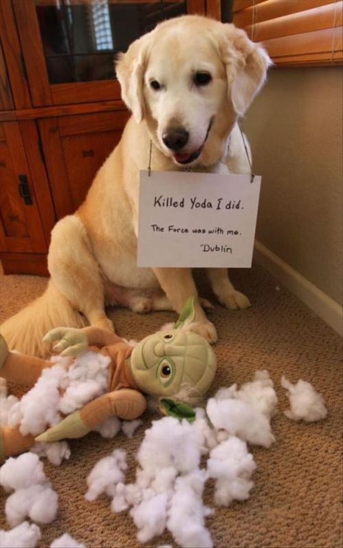 Dog Shaming Pictures for Your Monday Blues   Michael Bradley - Time ...