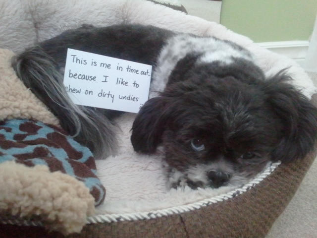 Dog Shaming Pictures for Your Monday Blues   Michael Bradley - Time Traveler