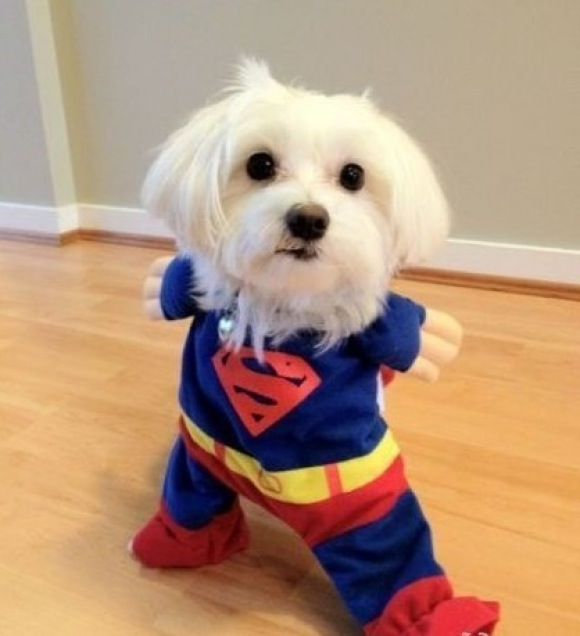 super-dog | Michael Bradley - Time Traveler