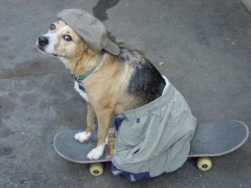 Dog That Actsl Like A Dog