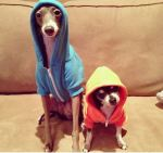animals-wearing-hoodies-7