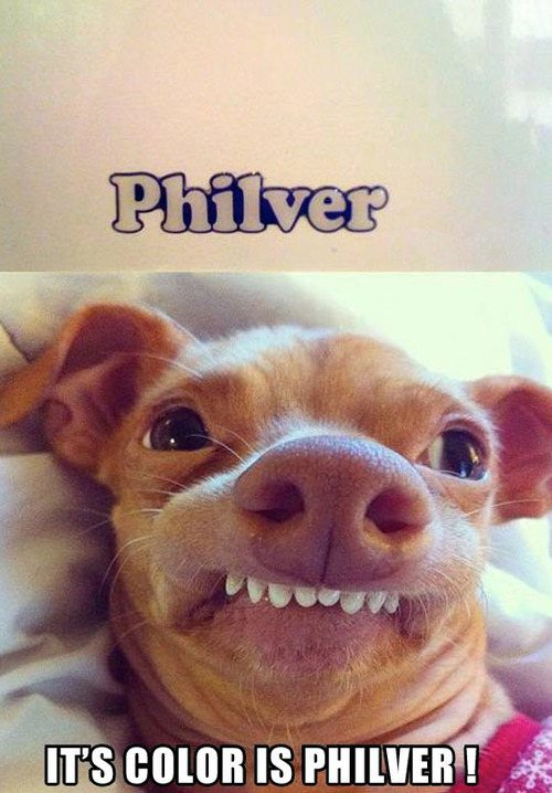 Funny dog face meme - photo#12