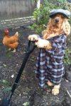 English Farm Hound