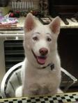 doggy-dog-world-09