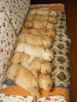 Syncronized sleeping