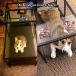pets-are-the-best-23