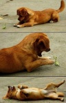 dogs-and-dogs-and-dogs-48