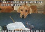 life-tough-get-dog-2