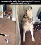life-tough-get-dog-292