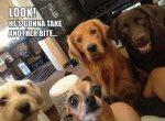 life-tough-get-dog-65