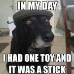 Old dog tales