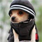 animals-wearing-hoodies-6