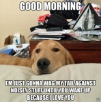 dogs-for-the-day-20