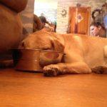 life-rough-get-dog-2