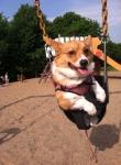 life-tough-dog-410