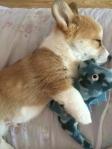 Sleepy time toy
