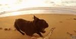 life-tough-dog-551