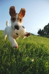 life-tough-dog-591
