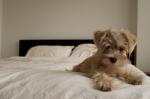 life-tough-dog-611